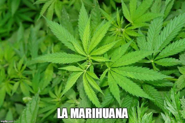 Como Liberarse De La Marihuana