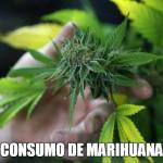 Informes sobre el Consumo de la Marihuana