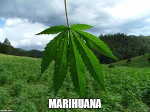 Efectos Negativos De La Marihuana
